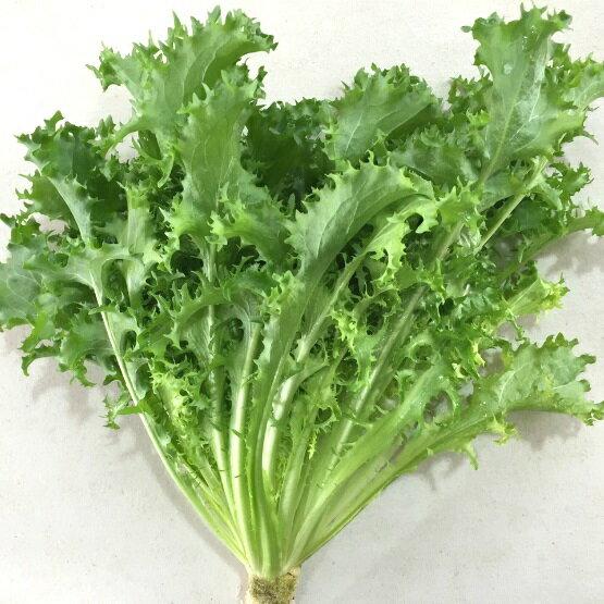 『水野菜』無農藥「菊苣」250g