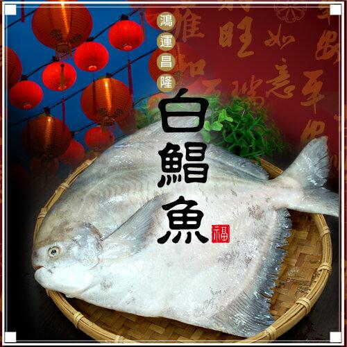 【築地一番鮮】頂級野生白鯧魚(已去肚淨重475-550g/尾)