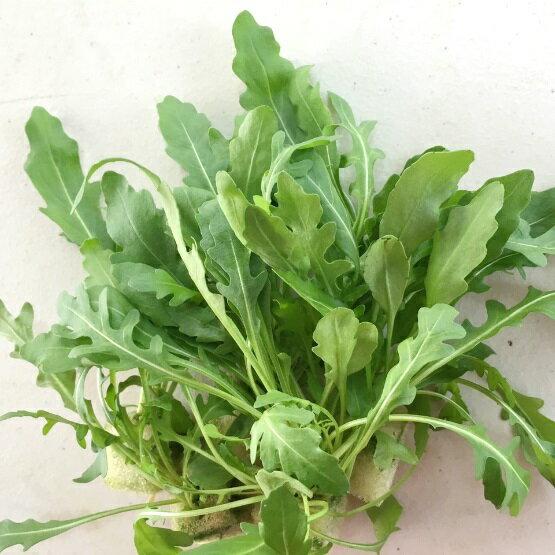 『水野菜』無農藥「芝麻葉」50g