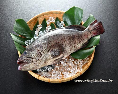 石斑魚(青斑)/800-1000克(尾) 0