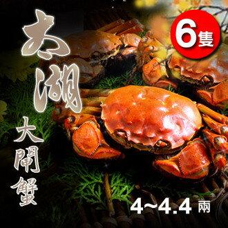 正宗太湖大閘蟹 4~4.4兩(6隻)