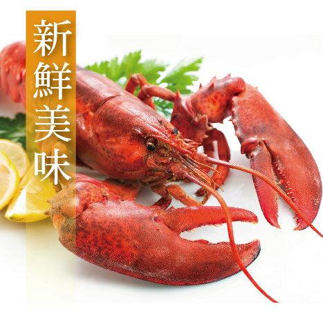 【有魚碼頭】加拿大生凍波士頓龍蝦(550~600g/隻)