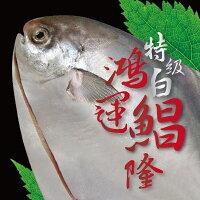 特級白鯧 鴻運昌隆 超大規格 每尾900~1000克 過年圍爐必備食材 頂級食用魚之一