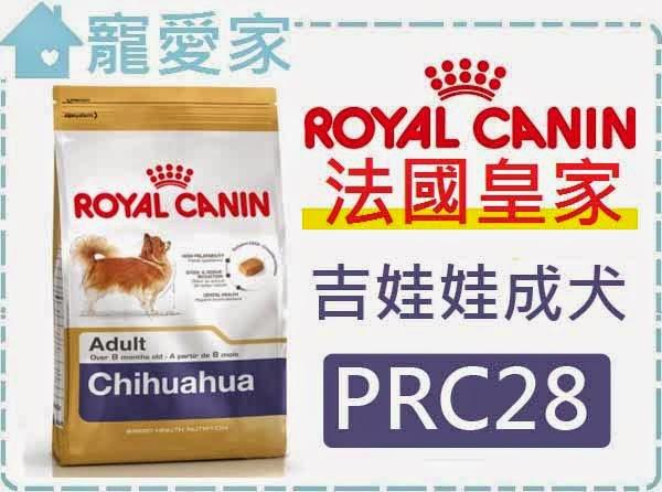 ☆寵愛家☆法國皇家PRC28吉娃娃成犬1.5公斤.