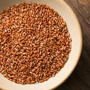 農舞系列 紅米 原生種米無農藥種植(600g)