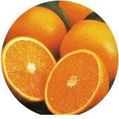 橘子精油10ml