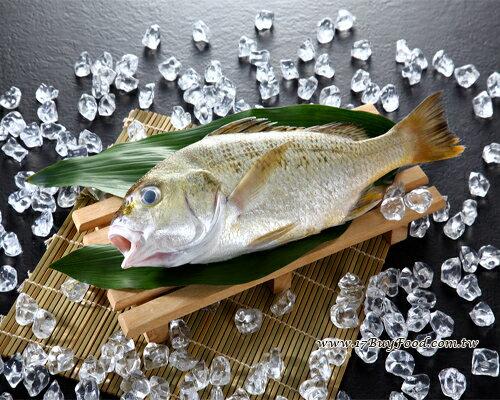 星雞魚(台牙魚)/800-900克(份) 0