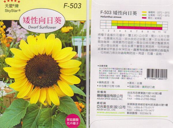 【尋花趣】天星牌 矮性向日葵 花卉種子 每包約20 粒 保證新鮮種子
