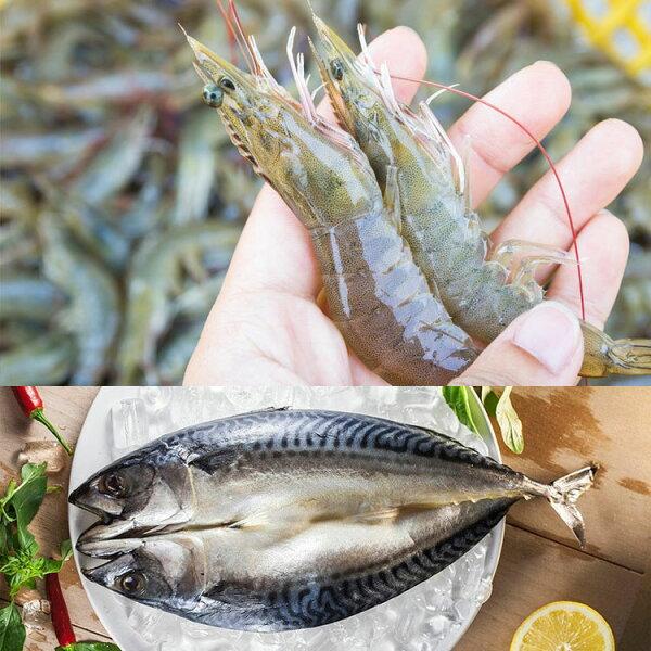 (超值免運組合)三尾特大號鯖魚+台灣無毒生態白蝦(大)一份