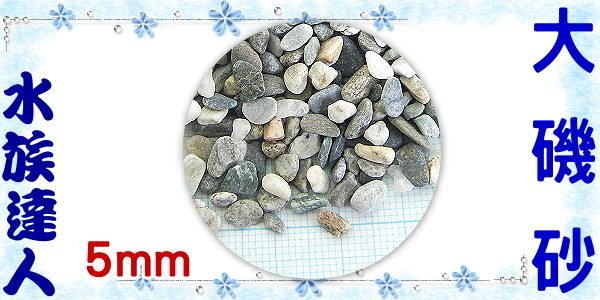 【水族達人】【底砂】《大磯砂散裝1kg.1分(約5mm)》水草造景/美觀/大方!