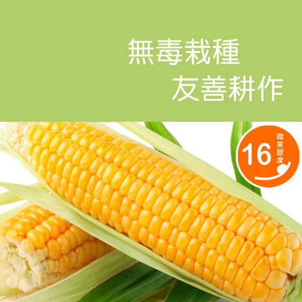 鮮綠農產|台灣樂天市場:無農殘超級甜 玉米