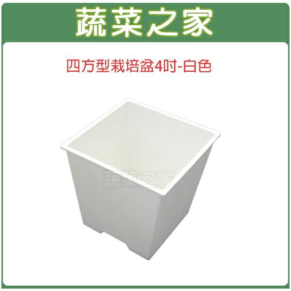 【蔬菜之家005-D111-WI】四方型栽培盆4吋-白色(厚)