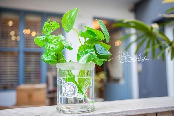 仿真水生植物~小樹苗生活雜貨~日本鄉村風拍照背景
