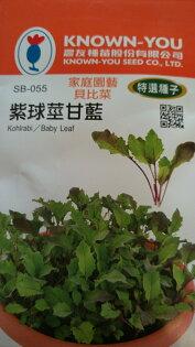【尋花趣】農友種苗 紫球莖甘藍 高麗菜(貝比菜種子) 蔬菜種子  每包約8公克(g) 保證新鮮種子