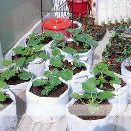 【種植袋-M400】種菜盆 植樹袋 美植袋(直徑38*28mm) 最低訂購量 4個-5101002
