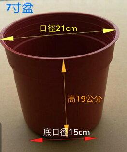 【尋花趣】7寸盆 栽培盆 紅色塑膠盆 紅盆 育苗盆 荷蘭盆