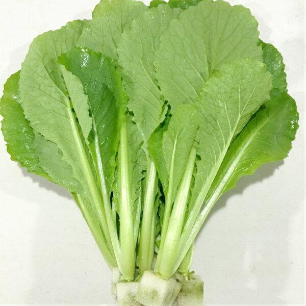 『水野菜』無農藥「大阪青松菜」250g