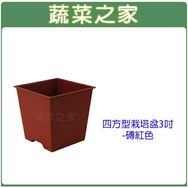 【蔬菜之家005-D110-RE】四方型栽培盆3吋-磚紅色(厚)