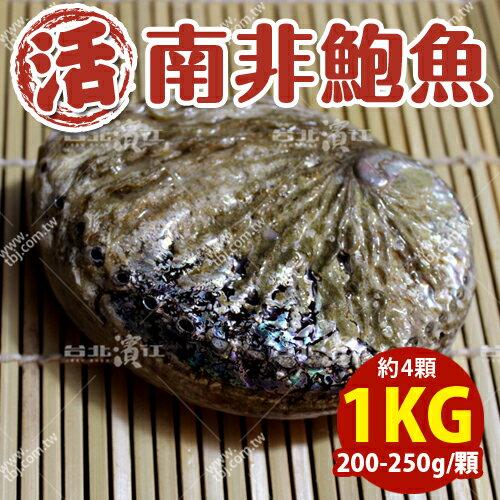 築地空運直送【台北濱江】南非活鮑魚200-250g/顆_1kg裝(約4顆)