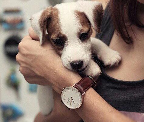 瑞典正品代購 Daniel Wellington 0607DW 銀 玫瑰金 真皮 錶帶 男女錶 手錶腕錶 36MM 1
