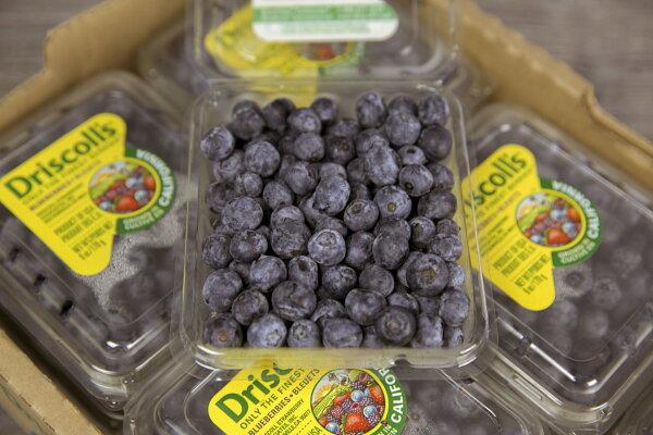 【 樂淇果物市集 】智利空運鮮採藍莓 / 12小盒一箱 1500g / 免運