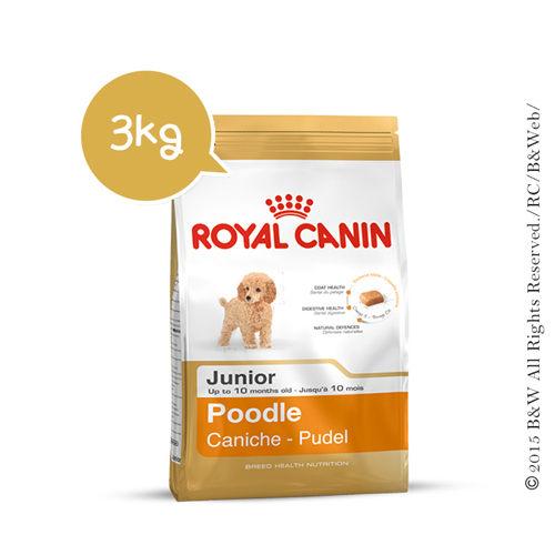 《倍特賣》法國皇家_貴賓狗幼犬PRPJ33 3KG