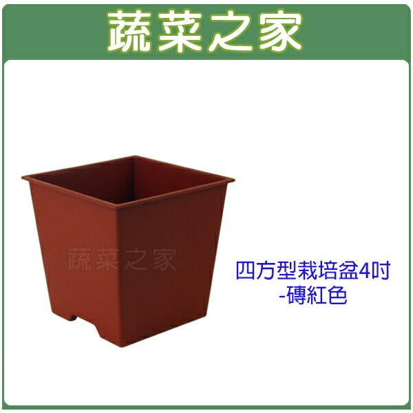 【蔬菜之家005-D111-RE】四方型栽培盆4吋-磚紅色(厚)
