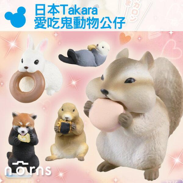 NORNS【日本Takara愛吃鬼動物公仔】轉蛋 日本T-ARTS玩具 倉鼠 浣熊 兔子吃東西