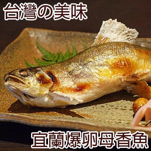 一番嚴選!台灣宜蘭超大爆卵母香魚 (淨重140g±10%/尾)