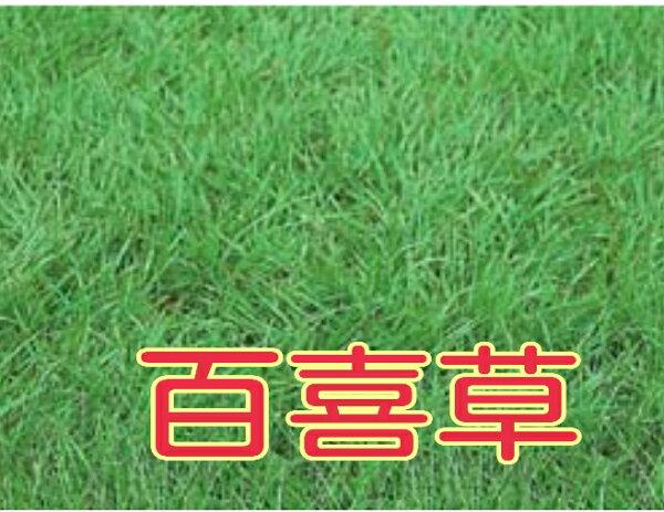 【尋花趣】百喜草 草皮種子 1公斤/包