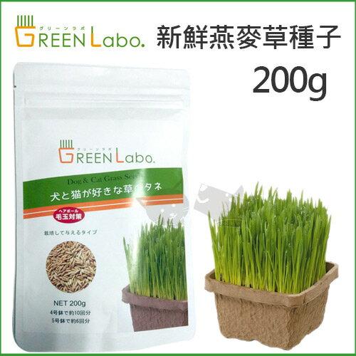 【日本Green Labo】DIY新鮮貓草種子 - 犬貓適用 / 無農藥栽培