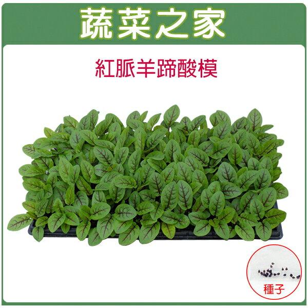【蔬菜之家】K30紅脈羊蹄酸模種子(紅脈酸模)50顆