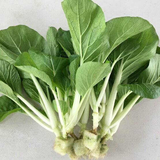 『水野菜』無農藥日本改良品種「奶油白菜」250g