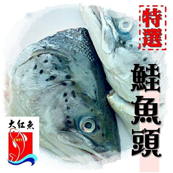 【大紅魚】鮭魚頭