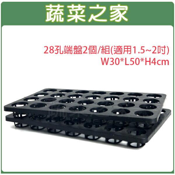 【蔬菜之家005-C91-28】28孔端盤2個/組(適用1.5~2吋)W30*L50*H4cm