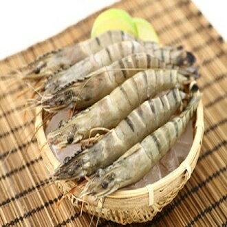 【海草蝦】一盒八隻(每隻約17cm共450克) ▶優鮮漁舖 Fish Golden