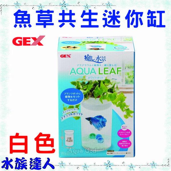 【水族達人】日本GEX《魚草共生迷你缸  白色 AZ-681-01》生態缸 圓柱型 魚草共生缸 特價