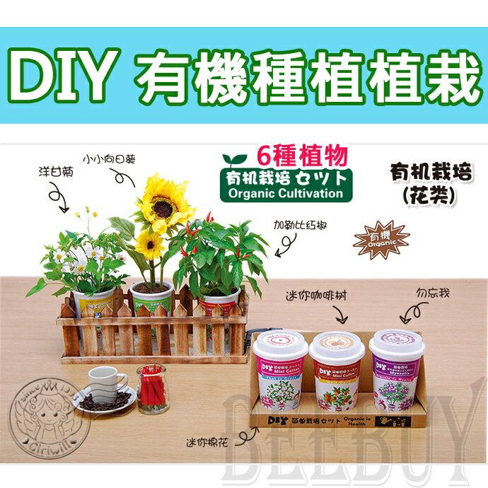 DIY有機種植 六種 植物 向日葵 洋甘菊 勿忘我 棉花 加勒比紅椒 咖啡樹 家庭 造景