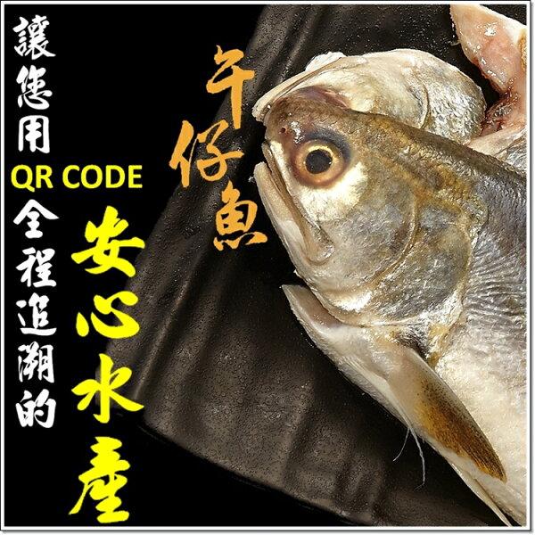 【 自然養成 絕對安心 】無毒午仔魚 ●買三送一● 附完整生產履歷QR-Code追朔 全國區漁會指定合作夥伴