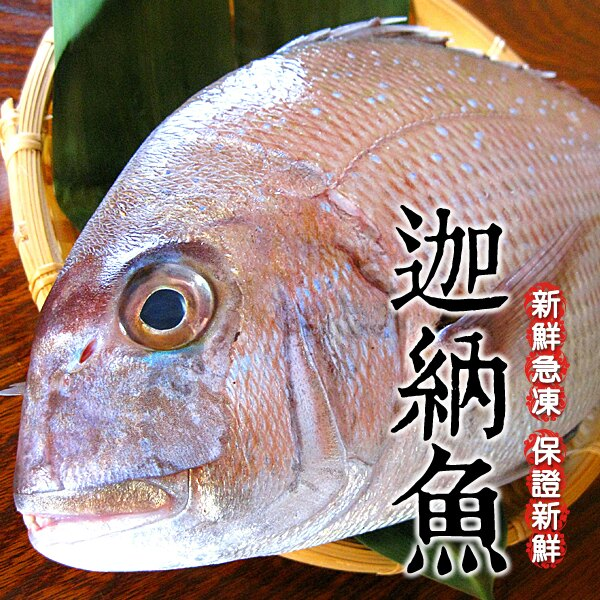 【船長幫我抓】野生迦納魚 | 台灣餐桌上的人氣魚類   550克±10% 1