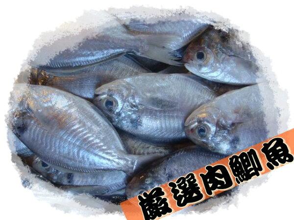 【大紅魚】台灣肉魚