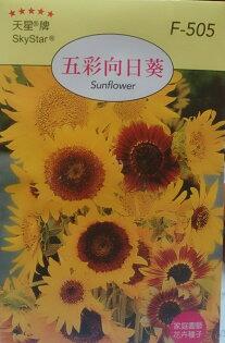 【尋花趣】天星牌 五彩向日葵  花卉種子 每包約20粒 保證新鮮種子