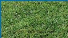 【尋花趣】全綠草 100公克 草種子 全年可播 適用於公園綠地 運動場 居家庭園 …