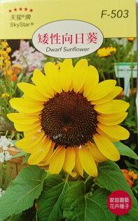 【尋花趣】天星牌  矮性向日葵 花卉種子 每包約20粒 保證新鮮種子