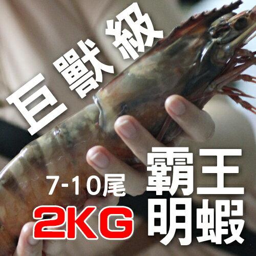 【免運/手臂長明蝦】2KG重的霸王明蝦,絕無僅有的巨大尺寸。7-10尾裝。感謝電視媒體推薦的巨獸神龍/禮盒【陸霸王】
