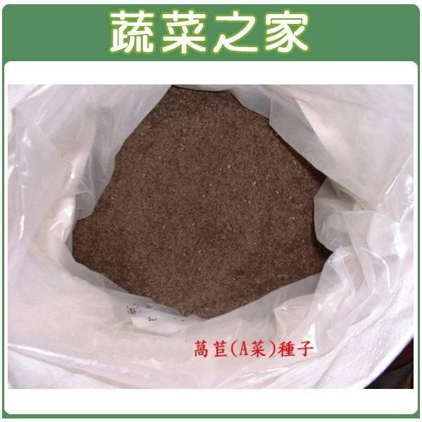 【蔬菜之家000-02】萵苣(A菜)種子500克(台大配方、中興配方媽媽茶萵苣籽)
