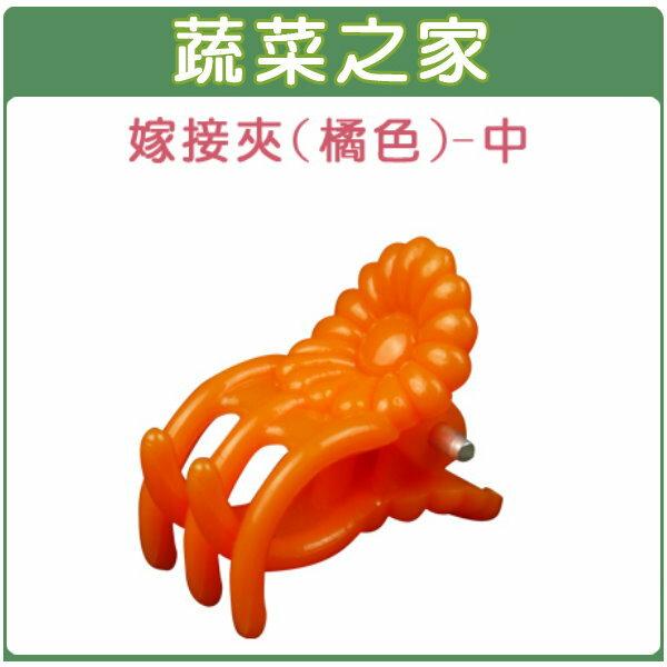 【蔬菜之家009-C63】橘色嫁接夾(蘭花夾.固定夾)-(中)30入/組