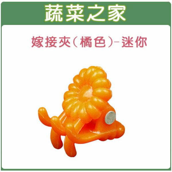 【蔬菜之家009-C68】橘色嫁接夾(蘭花夾.固定夾)-(迷你)30入/組