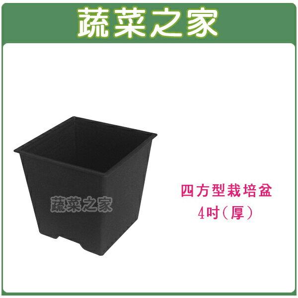 【蔬菜之家005-D111-BL】四方型栽培盆4吋-黑色(厚)