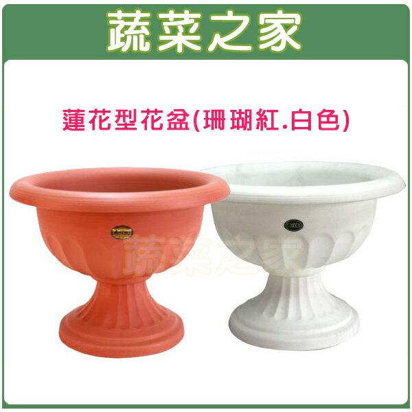 【蔬菜之家005-ROD078】蓮花型花盆-小(無孔)珊瑚紅.白色共2色